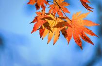 秋燥�r� 如何正�_��抗秋燥